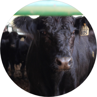 Farm Share Meat | Liberty Delight Firms